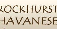 Rockhurst Havanese