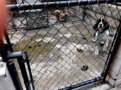 Academy Of Canine Behavior